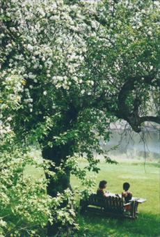 women under tree